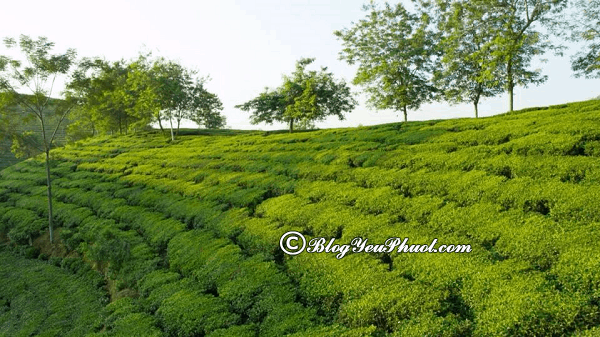 Kinh nghiệm đi rừng quốc gia Xuân Sơn du lịch: Hướng dẫn, tư vấn lịch trình tham quan, khám phá vườn quốc gia Xuân Sơn