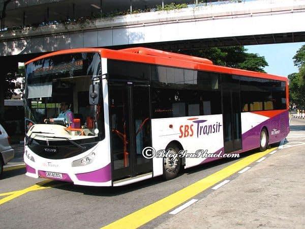 Kinh nghiệm đi xe bus ở singapore: Du lịch Singapore bằng xe bus như thế nào?