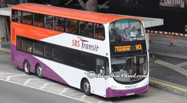 Kinh nghiệm đi xe bus ở singapore: Hướng dẫn đi du lịch Singapore bằng xe bus nhanh, thuận tiện nhất