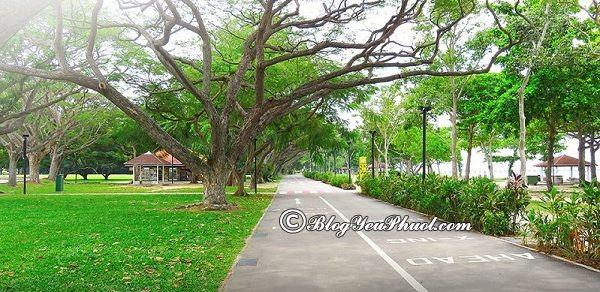 Những công viên đẹp nhất ở Singapore: Du lịch Singapore nên đi chơi ở công viên nào?