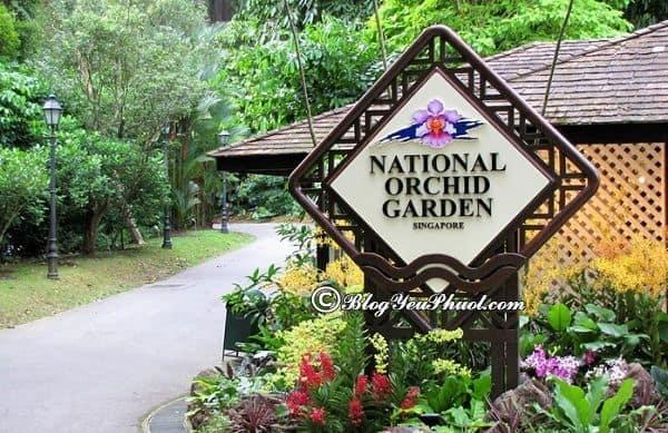 Những công viên đẹp nhất ở Singapore: Địa điểm những công viên vui chơi giải trí nổi tiếng ở Singapore