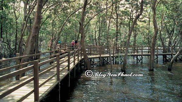 Những công viên đẹp nhất ở Singapore: Singapore có công viên giải trí nào nổi tiếng, thú vị nhất?