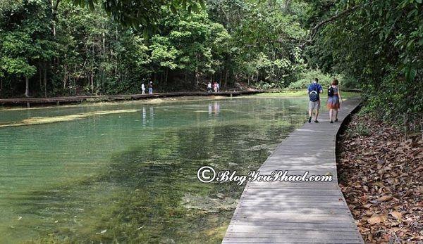 Những công viên đẹp nhất ở singapore: Nên đi chơi ở công viên nào khi du lịch Singapore?