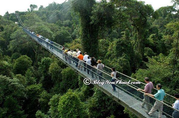 Đi đâu chơi khi du lịch Singapore? Địa điểm tham quan, du lịch miễn phí, nổi tiếng ở Singapore