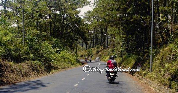 Đường đi từ Sài Gòn tới Bọ Cạp Vàng bằng xe máy: Hướng dẫn cách di chuyển từ Sài Gòn tới khu du lịch Bò Cạp Vàng