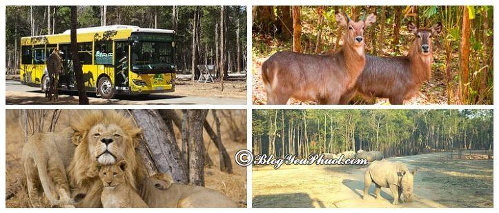 Công Viên Động Vật Hoang Dã Vinpearl Safari Phú Quốc: Những điểm vui chơi thú vị ở Vinpearl Phú Quốc