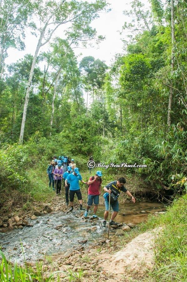 Khu du lịch sinh thái ở Đắk Nông: Du lịch Đắk Nông nên đi đâu chơi, tham quan?