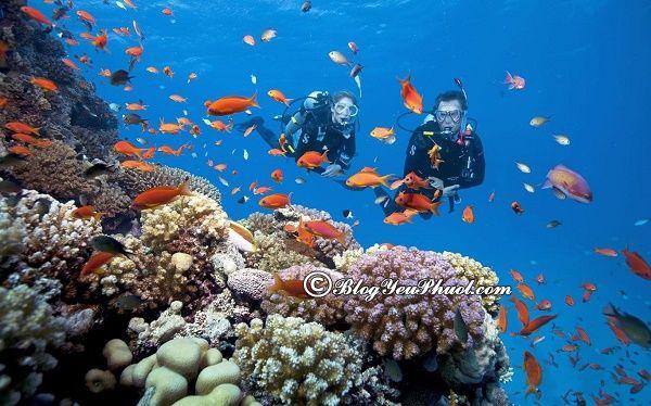 Chuẩn bị những gì khi đi lặn biển ở Nha Trang: Địa điểm lặn biển đẹp, nổi tiếng giá rẻ ở Nha Trang
