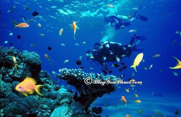 Kinh nghiệm lặn biển ngắm san hô ở Nha Trang: Lưu ý khi lặn biển ngắm san hô ở Nha Trang