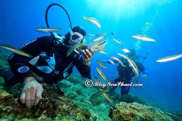 Nên đi lặn biển ở Nha Trang vào thời gian nào? Du lịch Nha Trang nên đi lặn biển ở đâu?