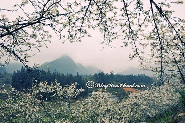 Thời điểm thích hợp nhất để đi phượt Mai Châu? Du lịch Mai Châu vào mùa nào, tháng mấy đẹp?