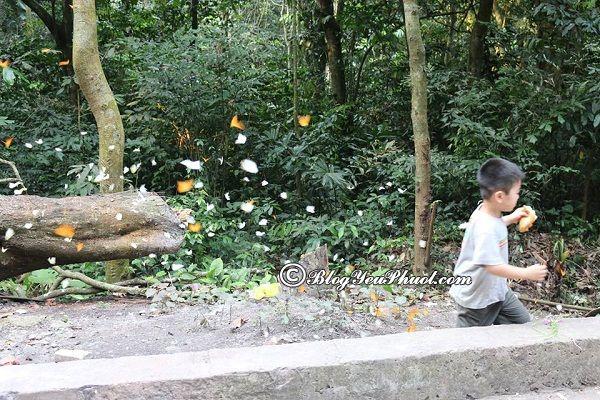 Kinh nghiệmdu lịch vườn quốc gia Cúc Phương từ Đà Nẵng: Hướng dẫn cách di chuyển từ Đà Nẵng tới vườn quốc gia Cúc Phương