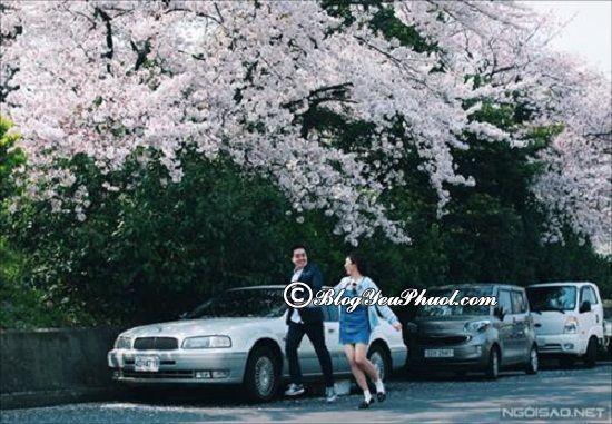 Cách thuê ô tô trên đảo Jeju giá rẻ: Hướng dẫn thủ tục thuê ô tô trên đảo Jeju