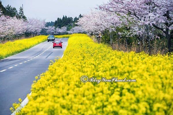 Du lịch đảo Jeju bằng xe ô tô: Kinh nghiệm thuê ô tô đi du lịch đảo Jeju