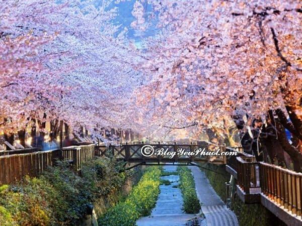 Nên đi du lịch Jeju, Seoul, Busan thời gian nào? Hướng dẫn lịch trình tham quan, vui chơi, ăn uống khi du lịch Jeju - Seoul - Busan