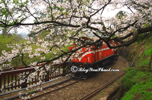 Di chuyển từ Đài Bắc đến Alishan bằng phương tiện gì? Hướng dẫn cách di chuyển tới núi Alishan, Đài Loan du lịch
