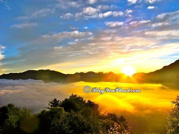 Làm gì khi đi du lịch Alishan từ Taipei? Nơi ngắm cảnh, chụp ảnh đẹp, ấn tượng ở núi Alishan