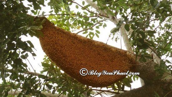 Mua mật ong rừng U Minh làm quà khi du lịch Cà Mau: Nên mua quà gì khi du lịch Cà Mau?
