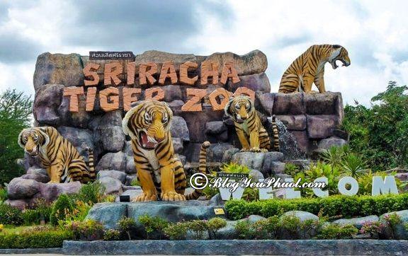 Lịch trình du lịch Bangkok - Pattaya 6 ngày 5 đêm: Nên đi đâu chơi khi du lịch Bangkok - Pattaya 6 ngày 5 đêm?