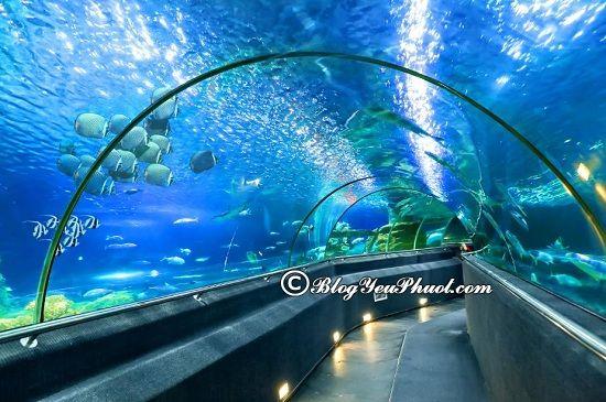 Khu vui chơiVinwonders Nha Trang: Những địa điểm tham quan, du lịch nổi tiếng, hấp dẫn ở Vinpearl Nha Trang
