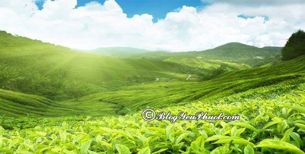 Địa điểm tham quan, vui chơi, ngắm cảnh, chụp ảnh đẹp ở Thái Nguyên: Phượt Thái Nguyên nên đi đâu chơi?
