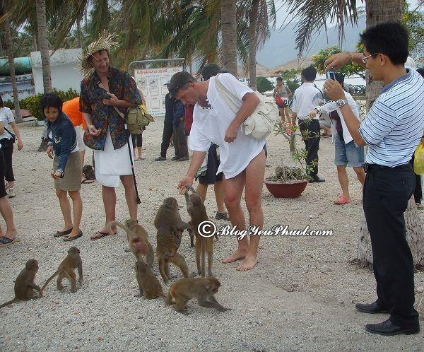 Du lịch Nha Trang nên đi đâu tham quan? Địa điểm du lịch nổi tiếng ở Nha Trang