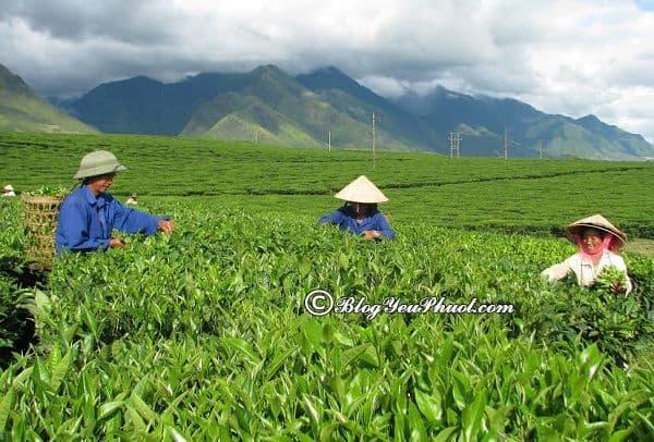 Địa điểm du lịch nổi tiếng ở Lai Châu: Phượt Lai Châu nên đi đâu chơi?