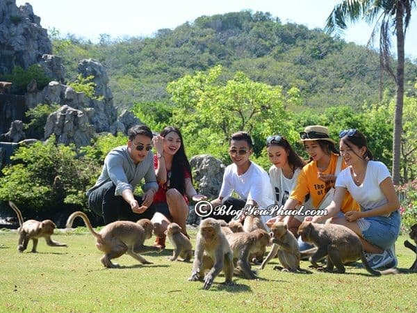 Du lịch đảo khỉ Nha Trang có trò chơi gì vui, thú vị? Kinh nghiệm phượt đảo khỉ Nha Trang