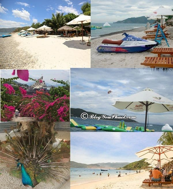 Hướng dẫn du lịch hồ cá Trí Nguyên, Nha Trang: Du lịch thủy cung Trí Nguyên chơi gì vui?