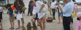Kinh nghiệm phượt đảo khỉ Nha Trang: giá vé, chơi gì, ăn ở