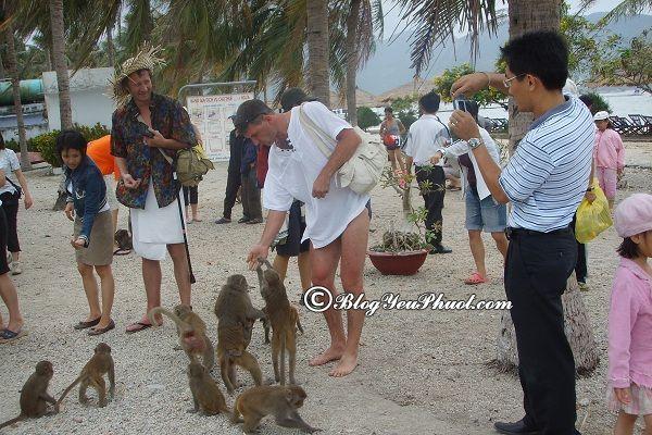 Kinh nghiệm du lịch đảo khỉ Nha Trang: Du lịch đảo khỉ Nha Trang có gì chơi vui, thú vị?