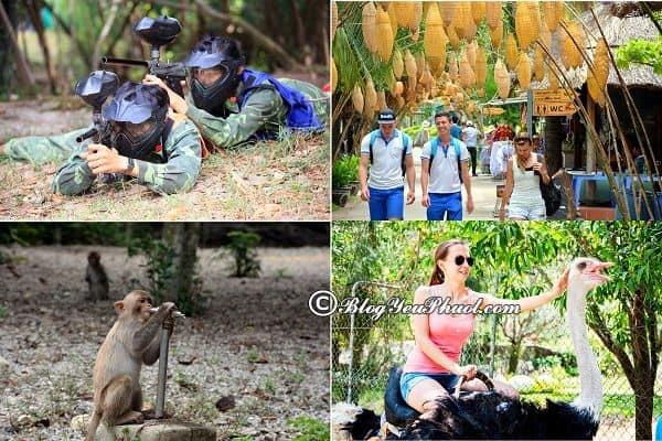 Kinh nghiệm phượt đảo khỉ Nha Trang: Nên chơi gì khi du lịch đảo khỉ Nha Trang?