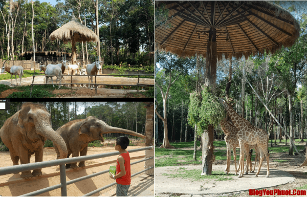 Kinh nghiệm du lịch Phú Quốc. Du lịch Phú Quốc nên đi đâu chơi? Vinpearl Safari Phú Quốc
