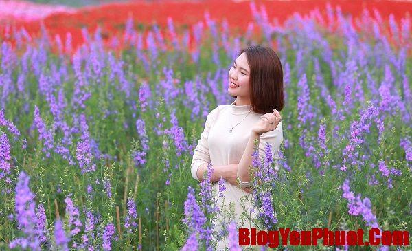 Review thung lũng hoa Hồ Tây giá vé, giờ mở cửa, địa chỉ. Chụp ảnh hoa violet ở thung lũng hoa Hồ Tây