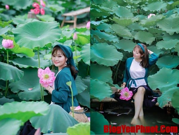 Review vườn hoa bãi đá Sông Hồng, Chụp ảnh với hoa sen ở bãi đá Sông Hồng