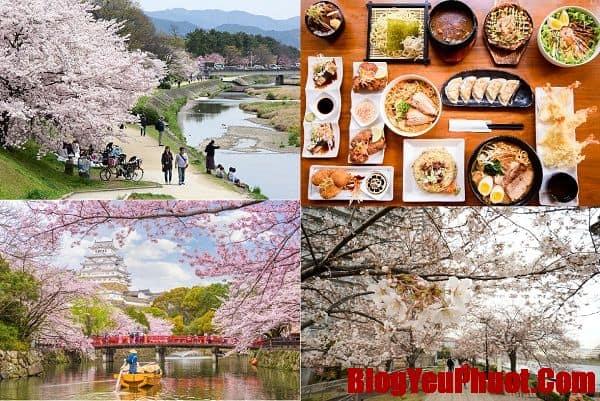 Du lịch Nhật Bản tháng 4 nên đi đâu, chơi gì? Địa điểm tham quan, vui chơi hấp dẫn ở Nhật Bản tháng 4. Có nên du lịch Nhật Bản tháng 4 hay không?