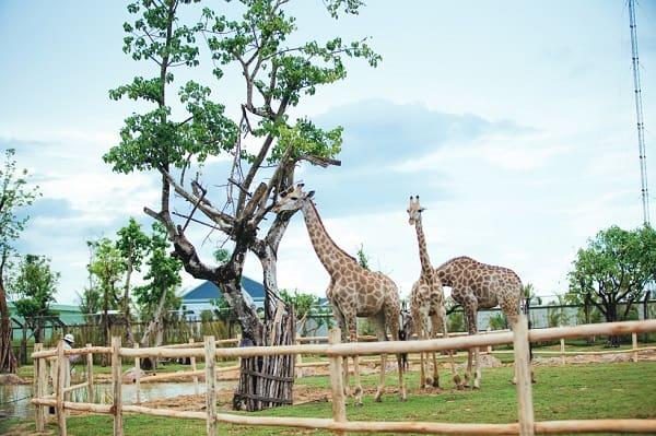 Khu công viên động vật Rivew Safari