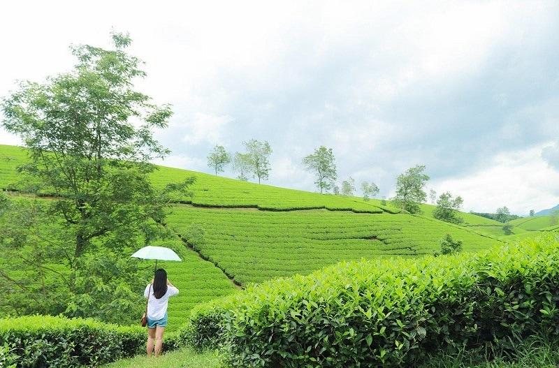 Kinh nghiệm du lịch đồi chè Long Cốc Phú Thọ