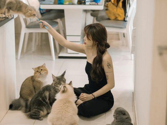 Những quán cafe mèo ở Hà Nội